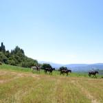 Castello_Romena_horse